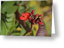 Red Snake Greeting Card
