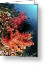 Red Soft Corals And Blue Leather Sea Greeting Card