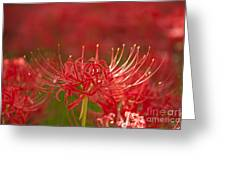 Red Spider Lily-1 Greeting Card