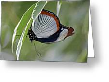 Red Spot Diadem Butterfly Greeting Card