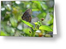 Red Spotted Purple Butterfly Greeting Card