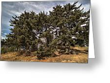 Red Spruce On Whitetop Mountain Greeting Card