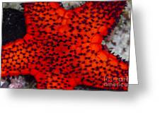Red Starfish In Raja Ampat, Indonesia Greeting Card