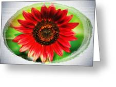 Red Sun Flower Greeting Card