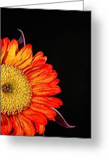 Red Sunflower IIi Greeting Card