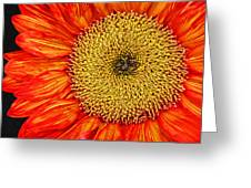 Red Sunflower Iv Greeting Card