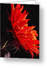 Red Sunflower Vi Greeting Card