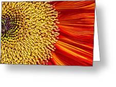 Red Sunflower Viiii Greeting Card