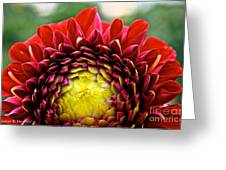 Red Sunrise Dahlia Greeting Card
