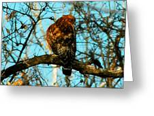 Red Tail Hawk Visitor Greeting Card
