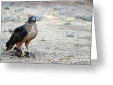 Red Tailed Hawk Catch Greeting Card
