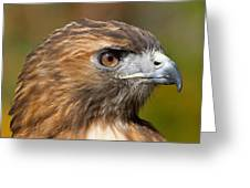 Red-tailed Hawk Portrait Greeting Card