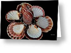 Red-toned Seashells Greeting Card