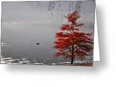 Red Tree On The Lake Front Greeting Card