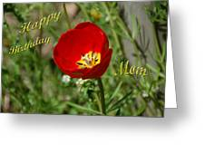 Red Tulip Birthday Greeting Card