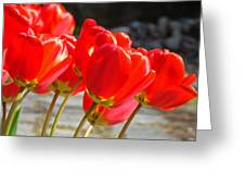 Red Tulip Flowers Art Prints Spring Florals Greeting Card