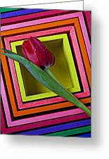 Red Tulip In Box Greeting Card