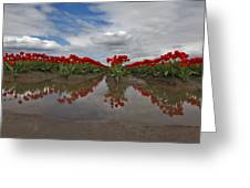 Red Tulip Reflections Greeting Card