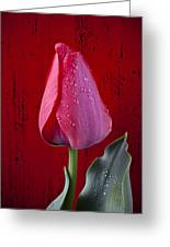 Red Tulip With Dew Greeting Card