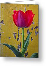 Red Tulip With Yellow Wall Greeting Card