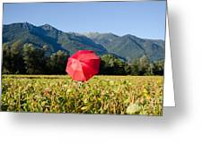 Red Umbrella On The Field Greeting Card