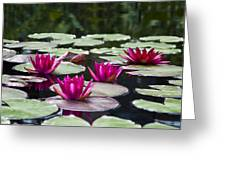 Red Water Lillies Greeting Card