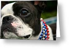 Red White And Boston Greeting Card