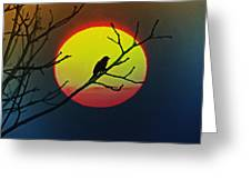 Red Winged Blackbird In The Sun Greeting Card