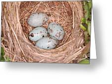 Red-winged Blackbird Nest Greeting Card