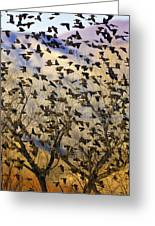Red-winged Blackbirds At Sunset Greeting Card