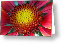 Red Yellow Flower Greeting Card