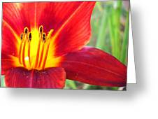 Red Yellow Lily Greeting Card