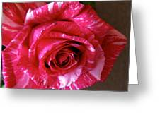 Red Zebra Rose  Greeting Card