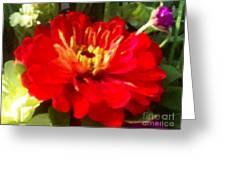 Red Zinnia Greeting Card
