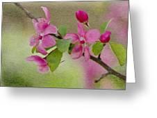 Redbud Branch Greeting Card
