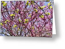 Redbud Sky Greeting Card