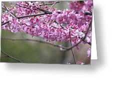 Redbud Tree In Spring Greeting Card
