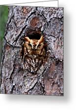 Reddish Screech Owl Greeting Card