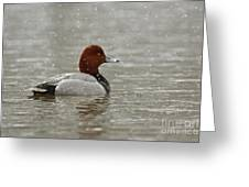 Redhead Duck In Winter Snow Storm Greeting Card