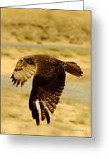Redtail Flight Greeting Card by Donna Blackhall