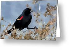 Redwing Blackbird Greeting Card