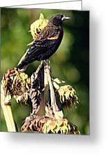 Redwinged Blackbird II Greeting Card