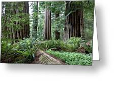 Redwood National Park, California Greeting Card