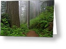 Redwood Path Greeting Card