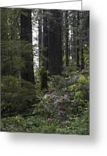 Redwoods 3 Greeting Card