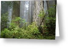 Redwoods In May Greeting Card