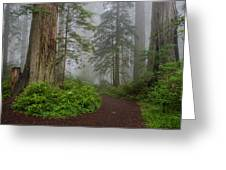 Redwoods Rising In Fog Greeting Card