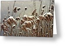Reed In Snow Greeting Card by Joana Kruse