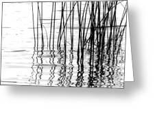 Reeds On The Turtle Flambeau Flowage Greeting Card