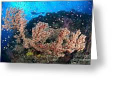 Reef Scene With Sea Fan, Papua New Greeting Card